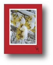 Witch Hazel holiday card