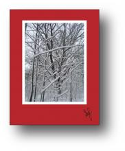 Snow Branches holiday card