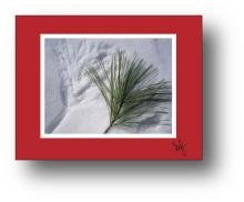 Pine holiday card