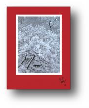 Snow Tree holiday card