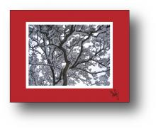 Snow Silhouette holiday card - horizontal