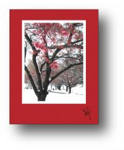 Snow Cherry holiday card