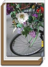 Flower Bike box set